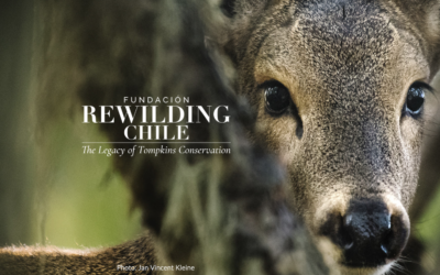 Rewilding Chile Is Launched