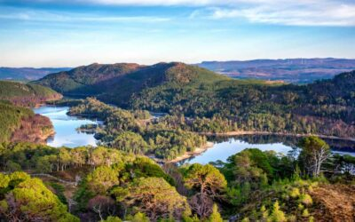 Two Global Rewilding Alliance members work together to restore the Scottish Highlands